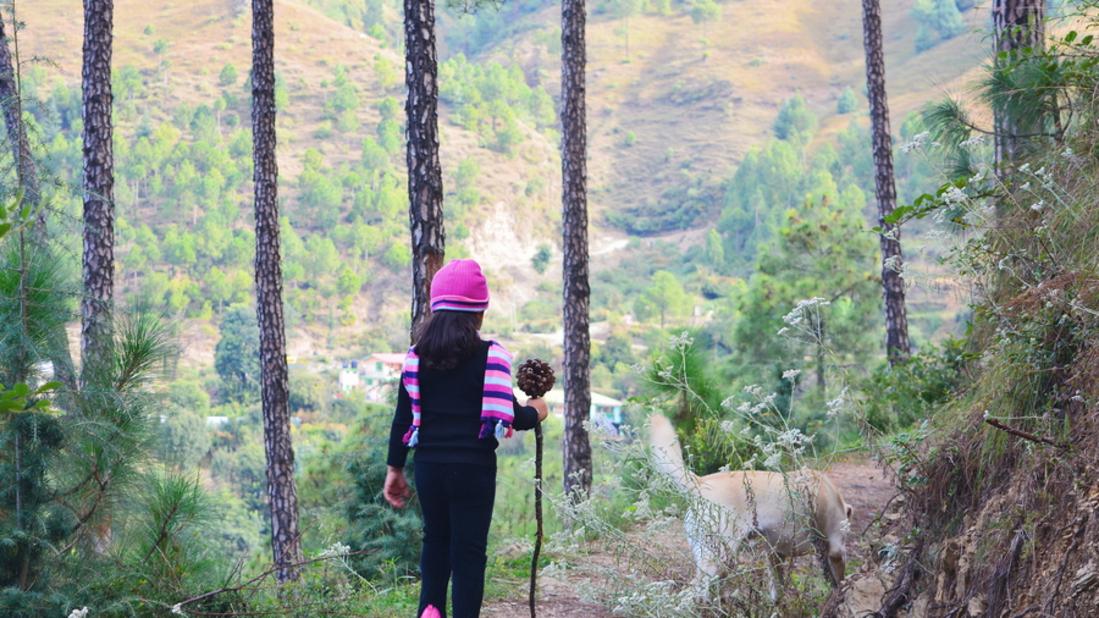 Shimla Water Catchmentanct Wildlife Sanctuary