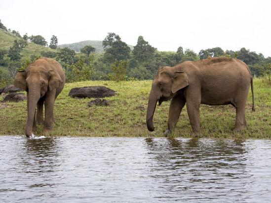 elephant junction thekkady neeramaya retreats hotel in thekkady