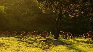 Jungle Safari At Kabini, Wildlife at Kabini, Activities In Kabini, The Serai Kabini, Resorts In Kabini 1