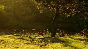 jungle-safari-nature-walk-at-the-serai-kabini