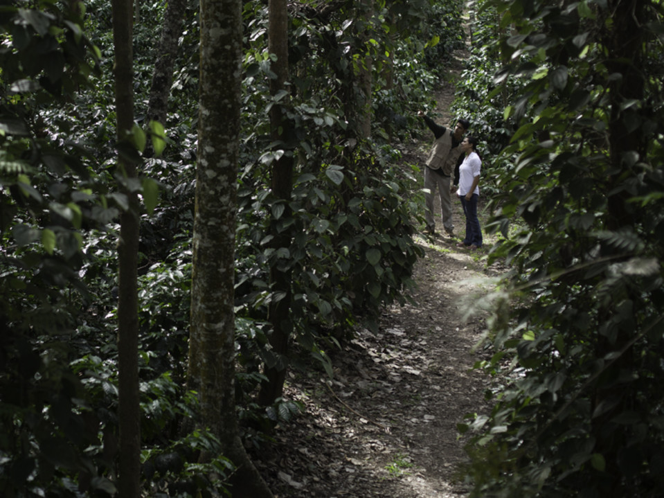 Coffee Plantation Walk, The Serai Chikmagalur, Luxury Resorts in Chikmagalur
