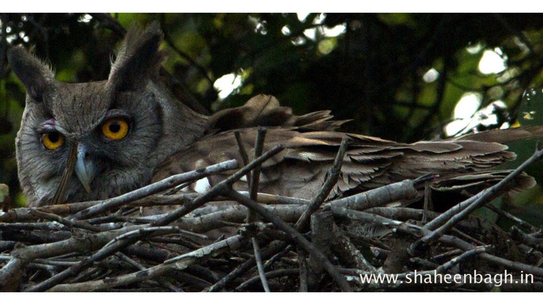 birds Shaheen Bagh Resort Best resorts in dehradun 36