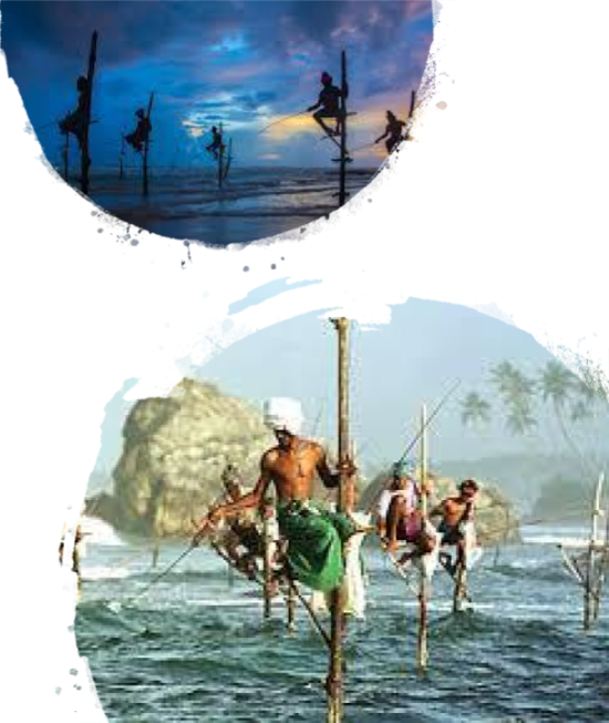 OTP - Destination Guide to the South Coast of Sri Lanka 7