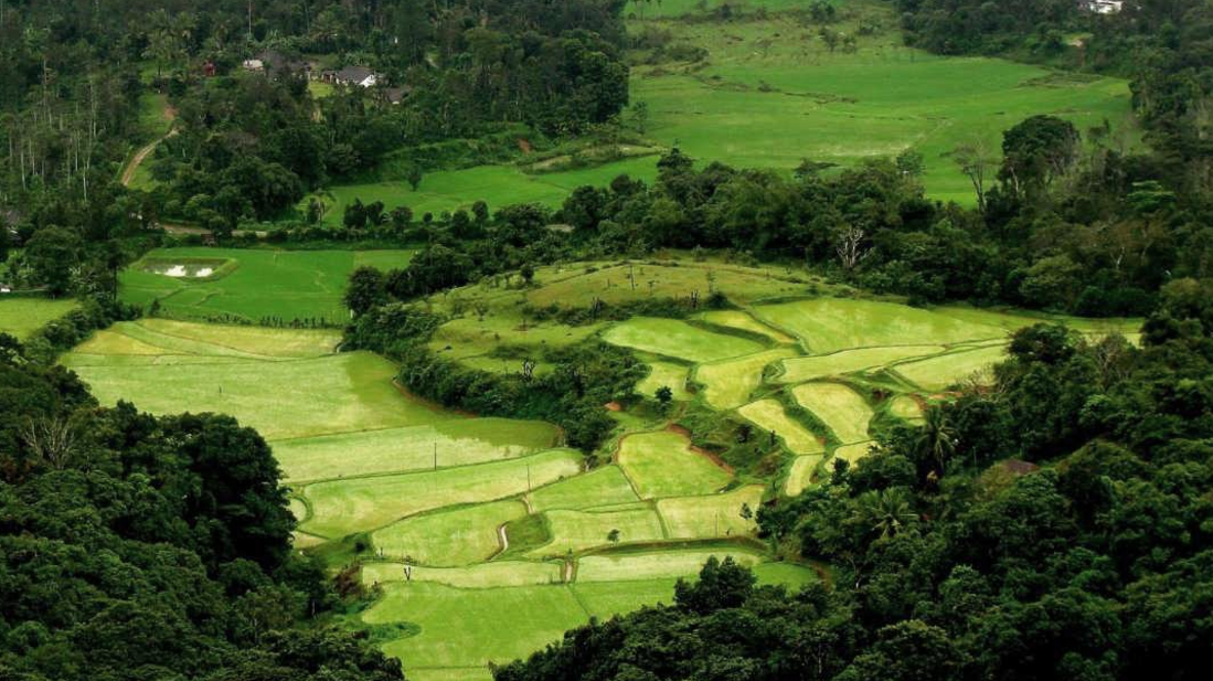 Green Coorg Rice Fields