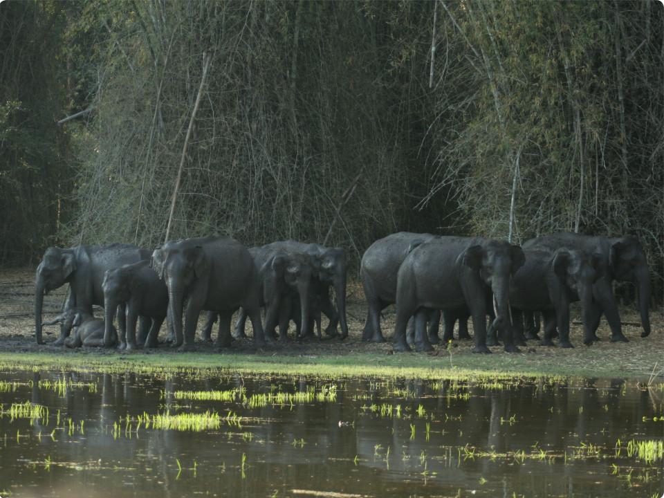 Wildlife Adventure, The Serai Kabini, Resorts Near Kabini 1