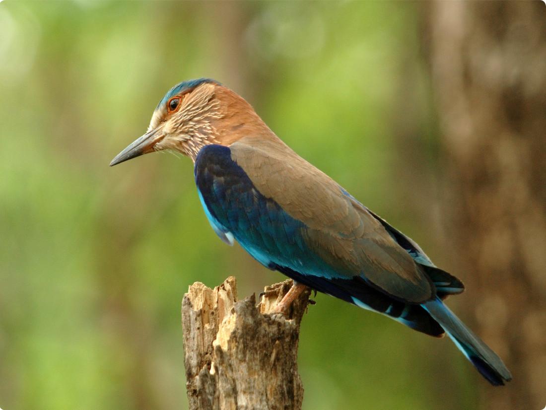 Bird Watching in Kabini, The Serai Kabini, Waterfront Resorts in Kabini 1