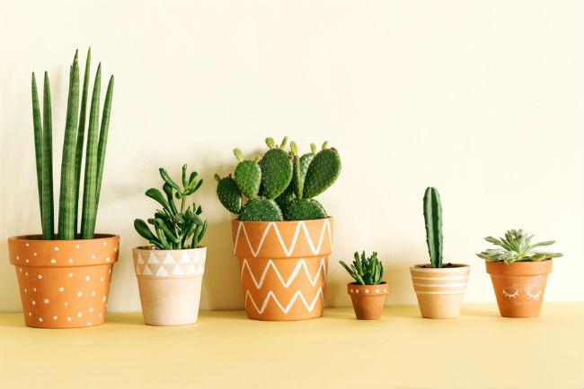 Sisternet Punya Kaktus Dan Sukulen Begini 9 Cara Merawatnya