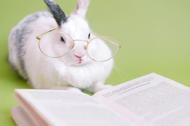 white rabbit against a light sage background