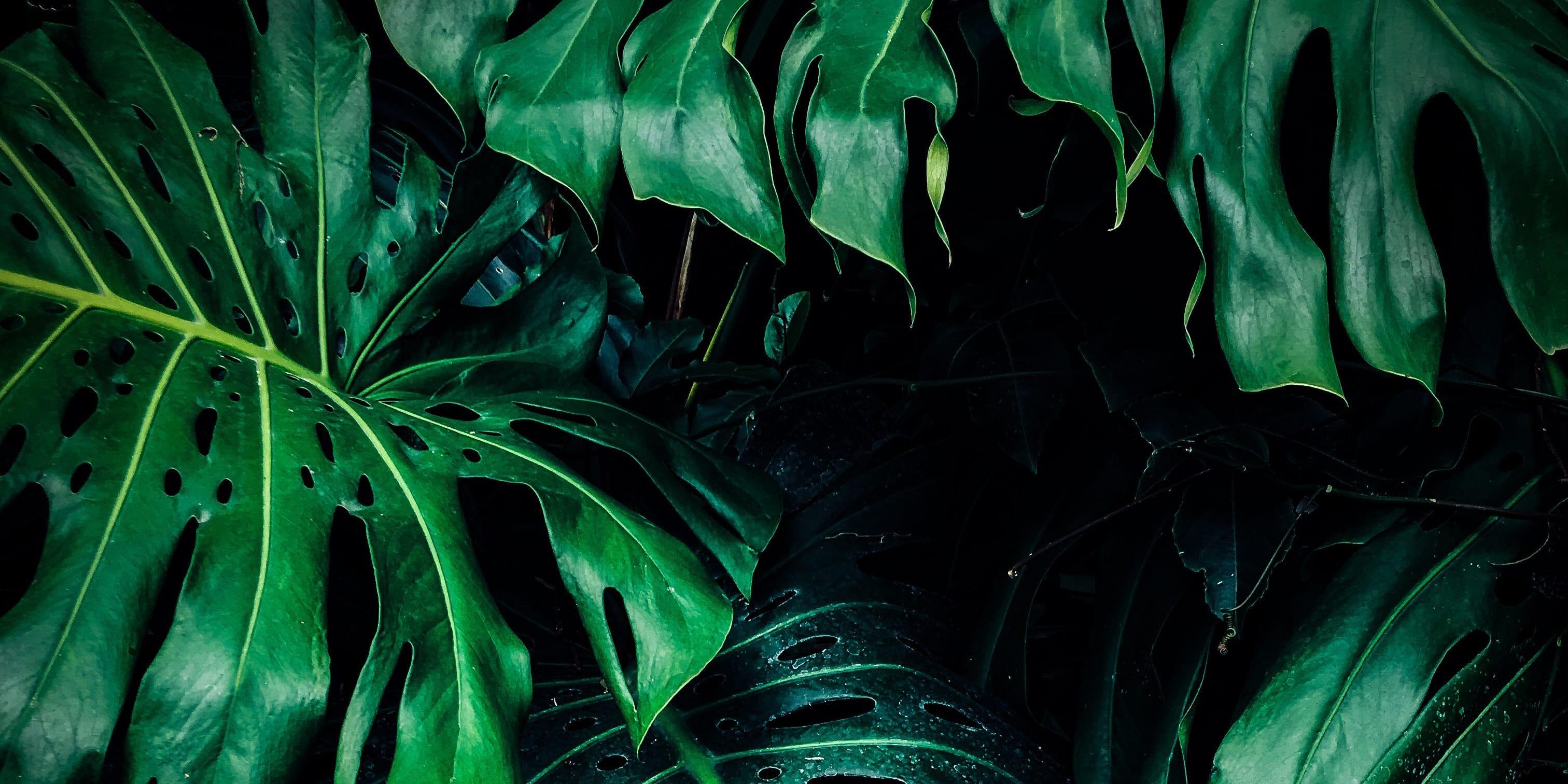 deep green wild plant