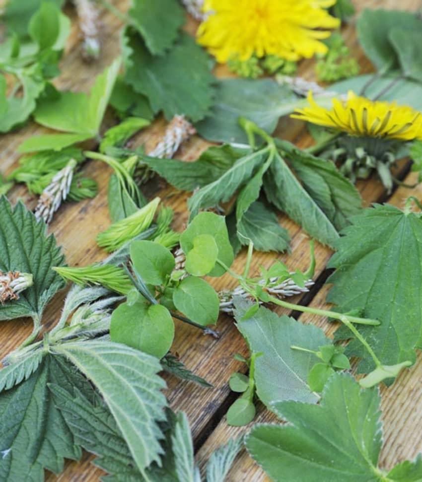 Vildvuxet och grönt -  ätbara vilda växter
