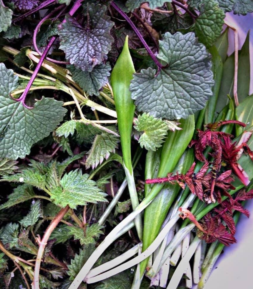 Lär dig om vilda ätbara växter