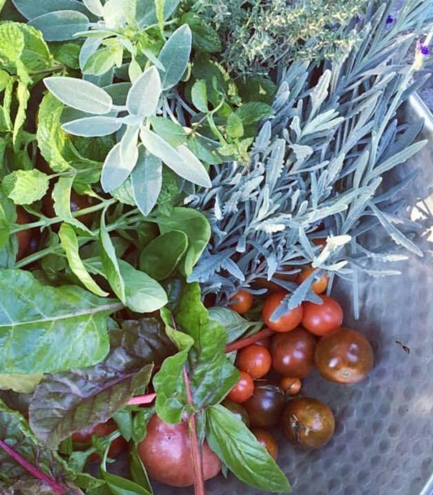 Detoxa med grön mat