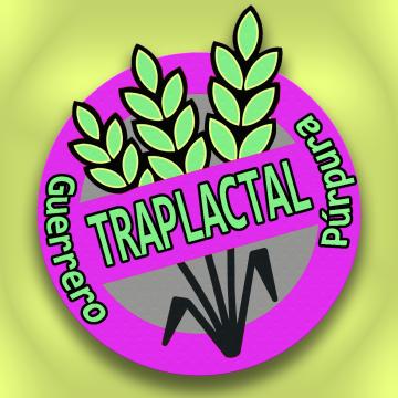 Guerrero Púrpura - Trap lactal Artwork
