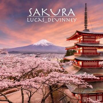 Shopenhare - Sakura Artwork