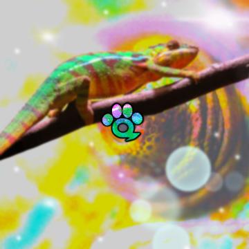 Music For Wildlife - Chameleon Artwork