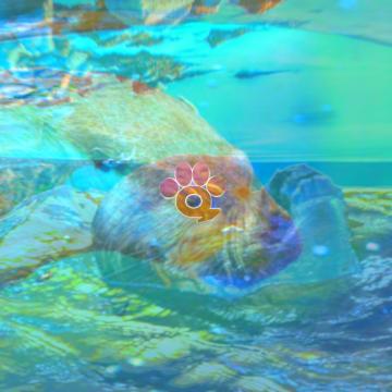 Music For Wildlife - Otter Artwork