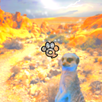 Music For Wildlife - Meerkat Artwork