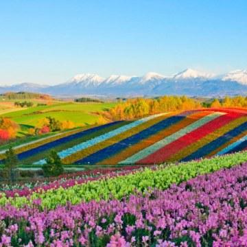 PASCAL - Hokkaido Artwork