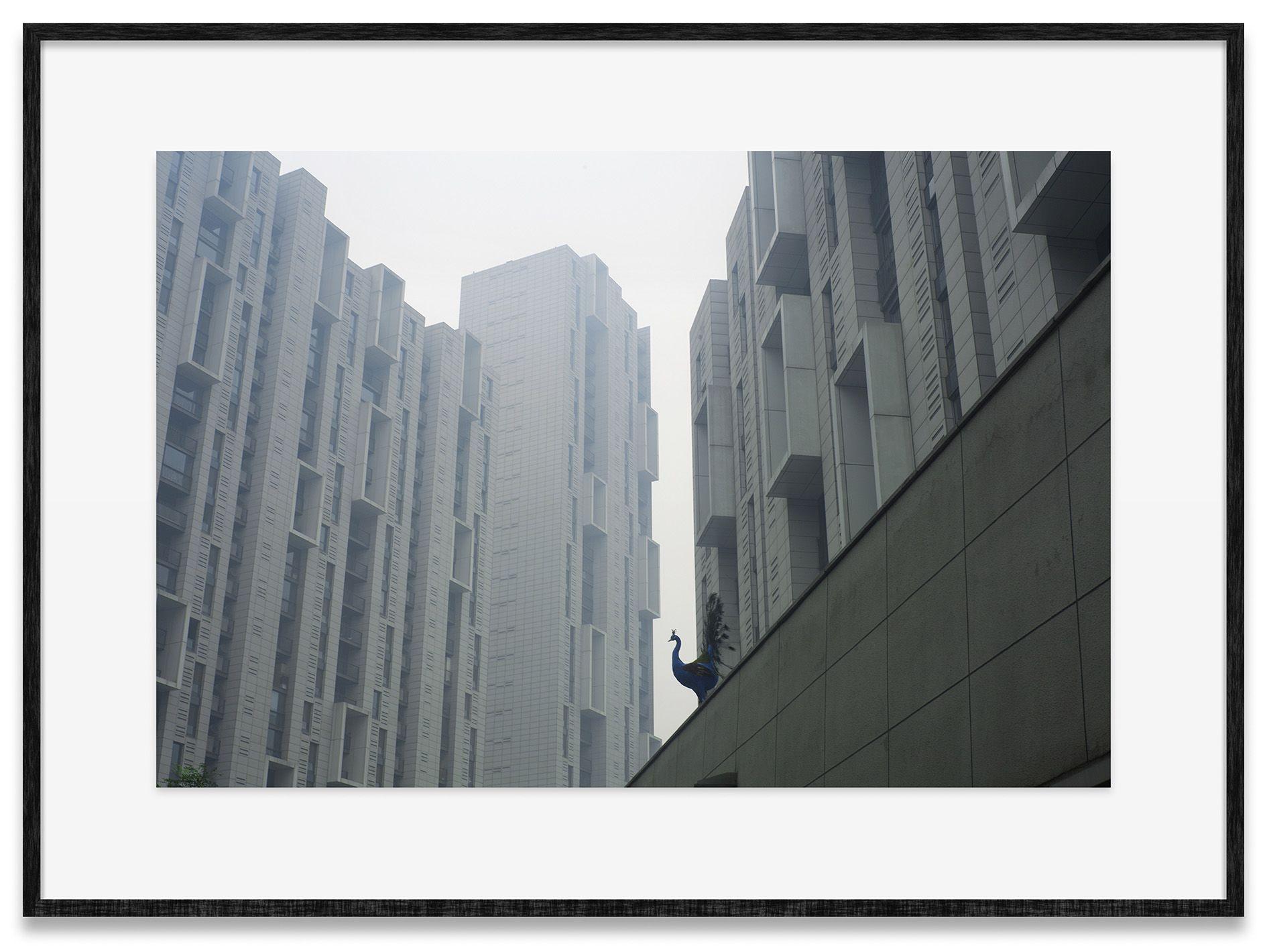 Cao Fei – Cao Fei – Los Angeles
