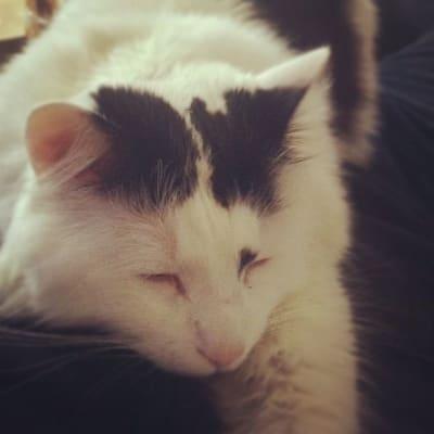 Dominic the cat, sleeping