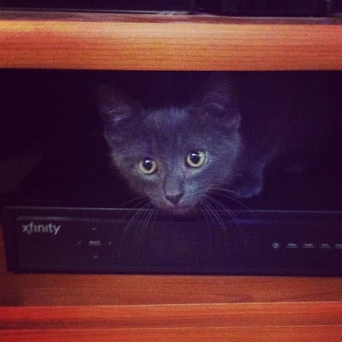 Randy the cat pokes his head out from the cable box shelf