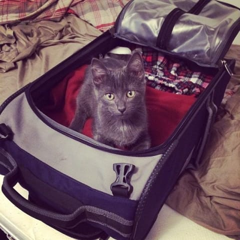 Randy the cat sits in my suitcase as I pack