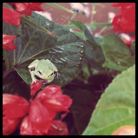 Frog resting on leaf petal