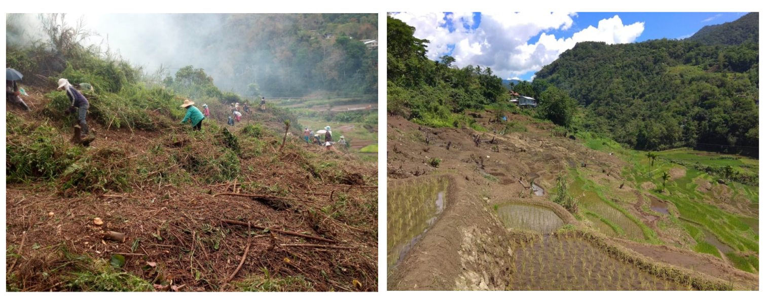 SNAP, Banaue LGU restore abandoned rice terraces in local barangay