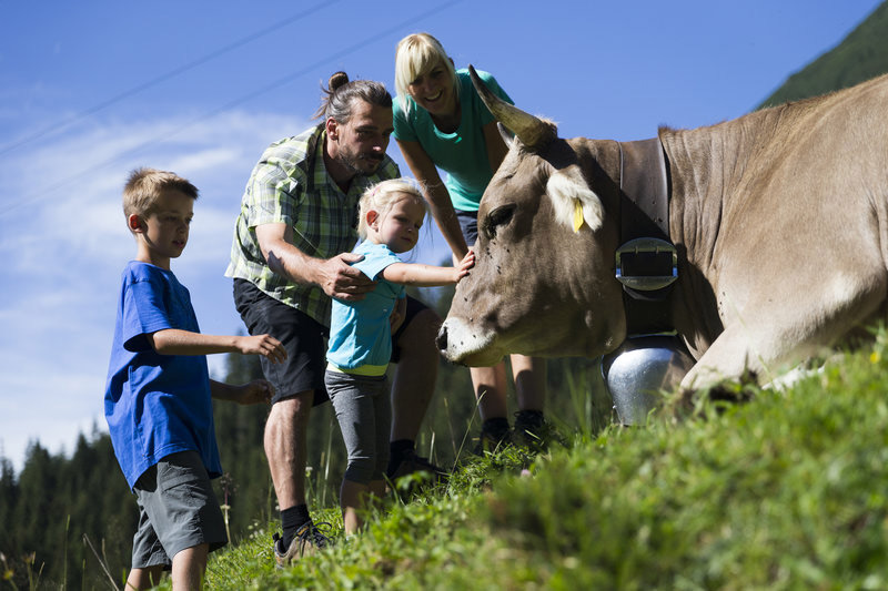Familie met een koe in de bergen