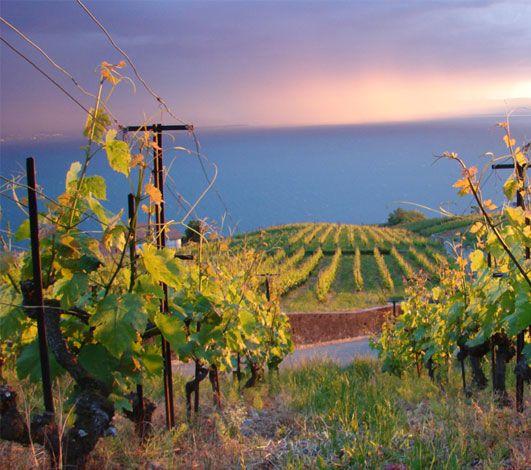 Le vin, vecteur de partage et de convivialité – un catalyseur lors d'un séminaire