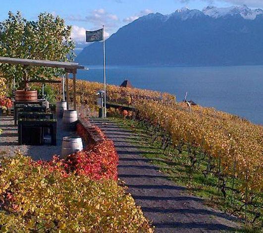 5 domaines viticoles en Lavaux à privatiser pour vos événements