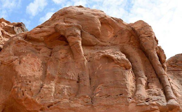Des chameaux de pierre dans le désert saoudien