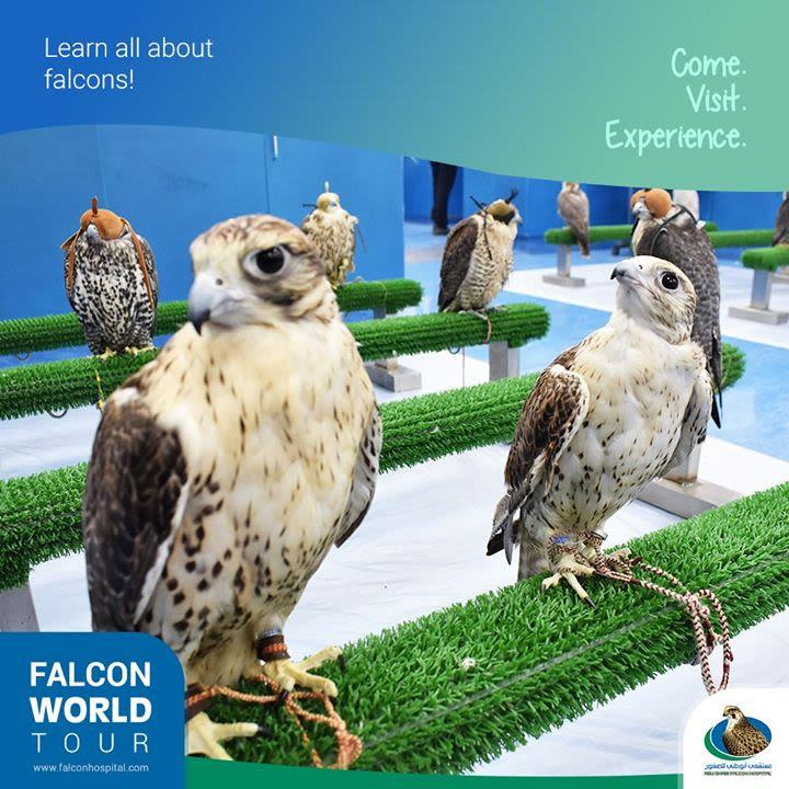 Home   Abu Dhabi Falcon Hospital