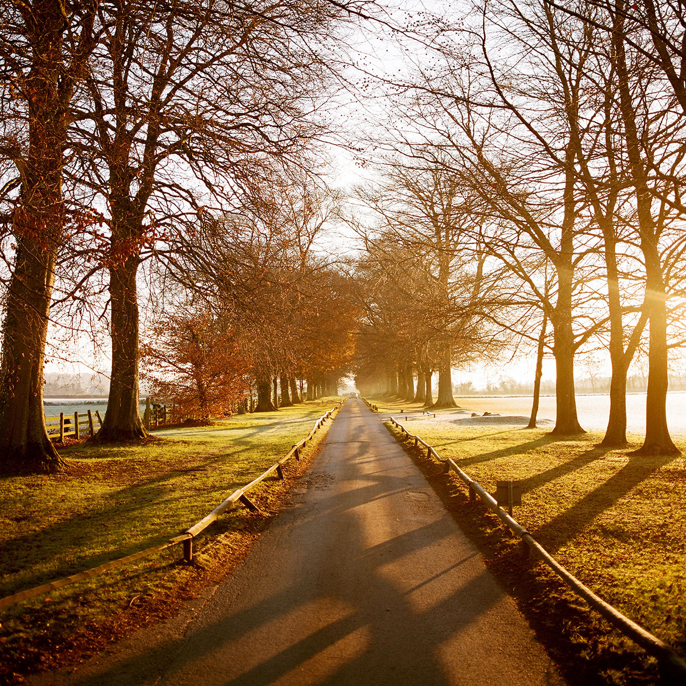 A country drive lined by trees at sunrise.