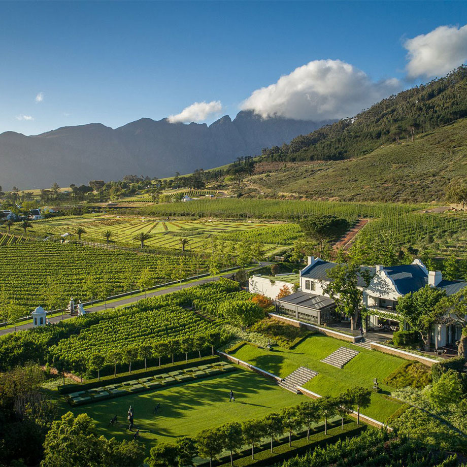 vineyard in cape town