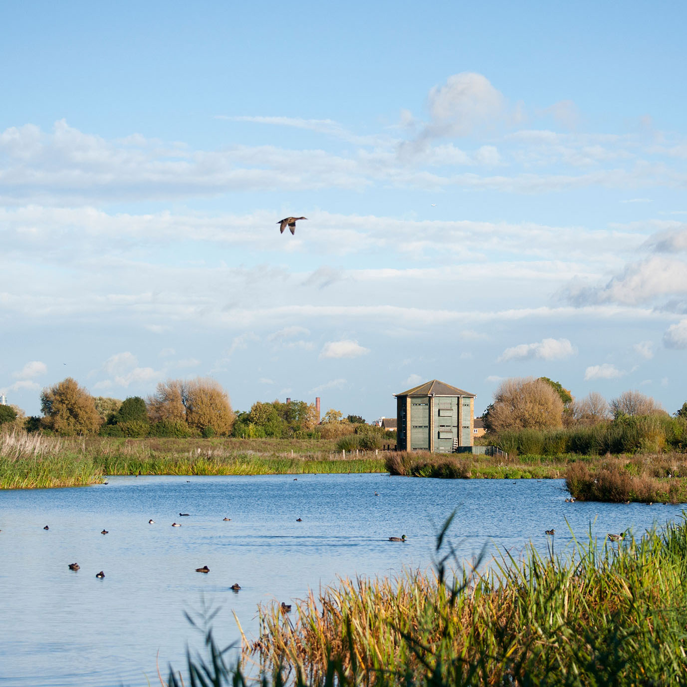 a bird flying over a wetlands lake