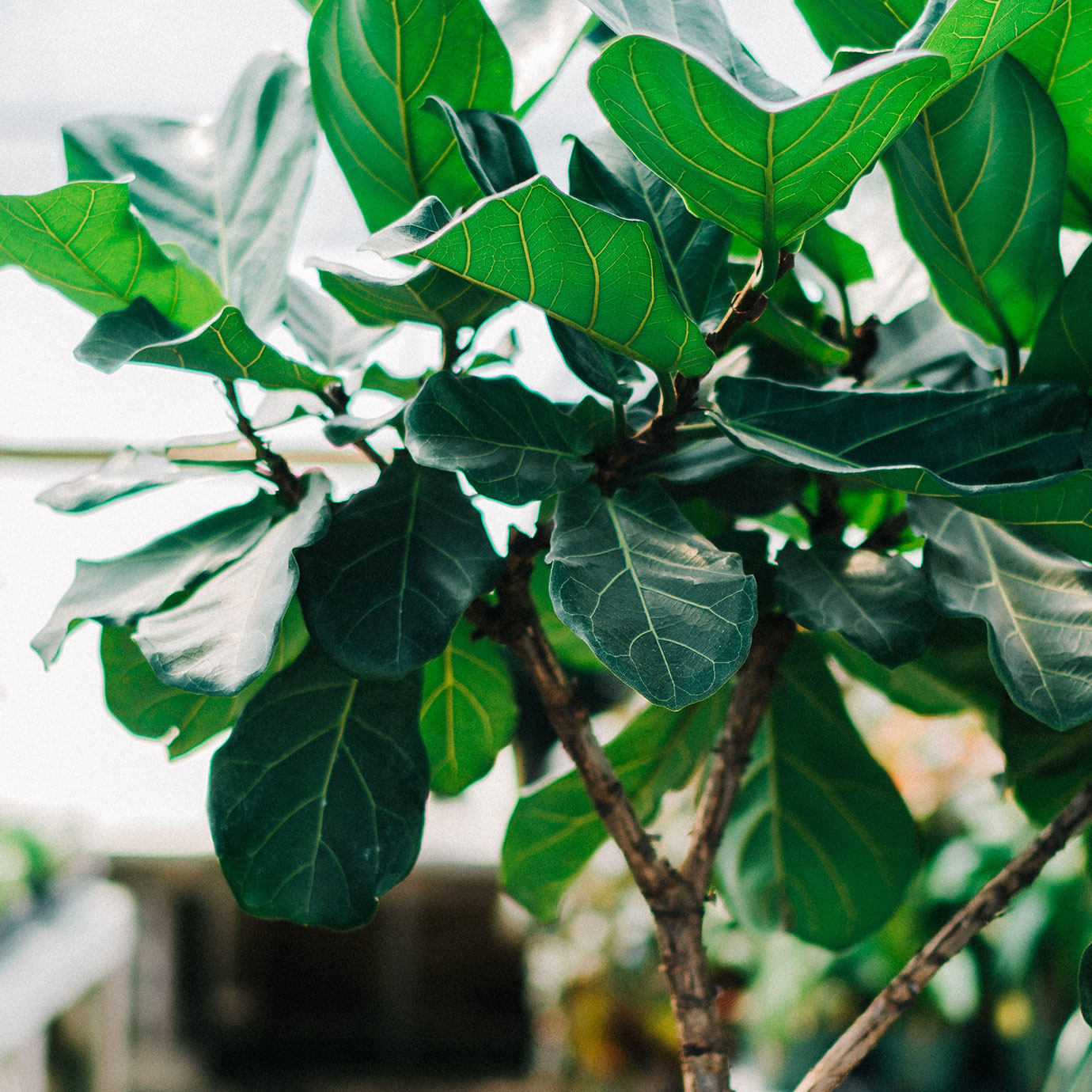 A small green leafed tree.