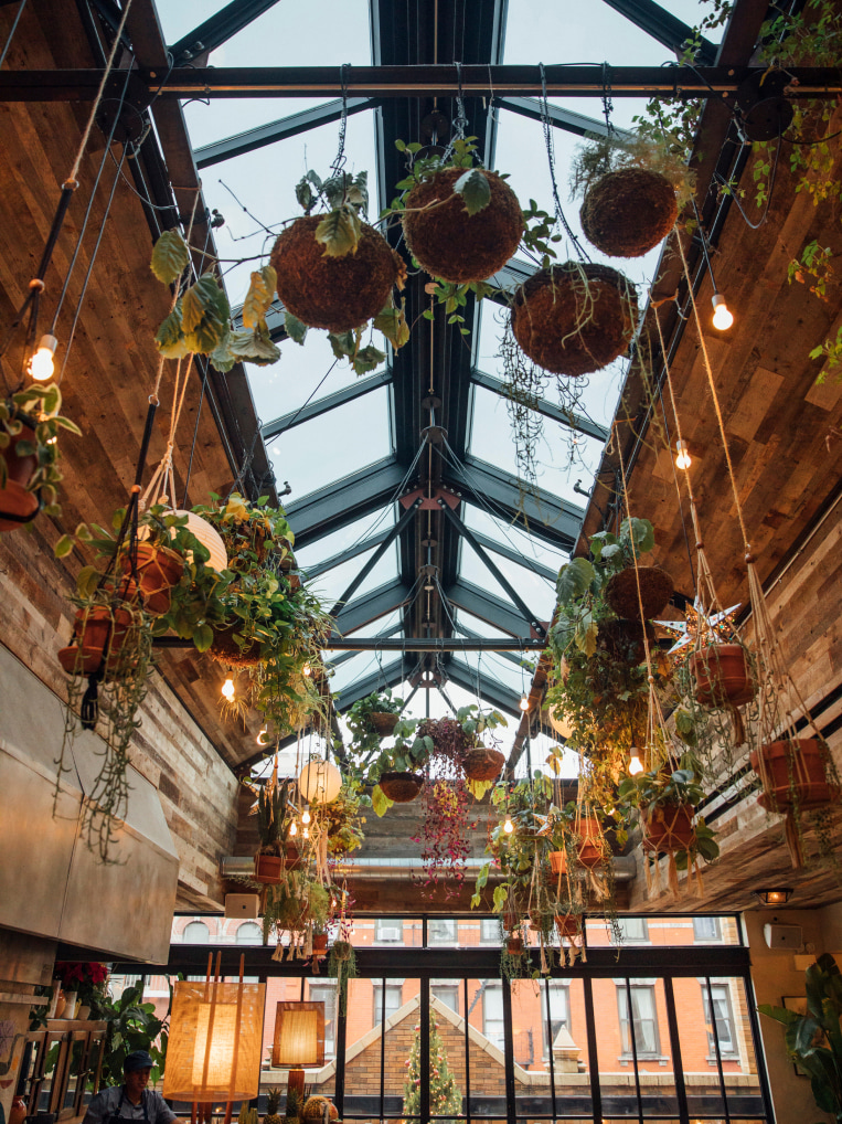 A warehouse type roof with glass and plants hanging down from the rafters.