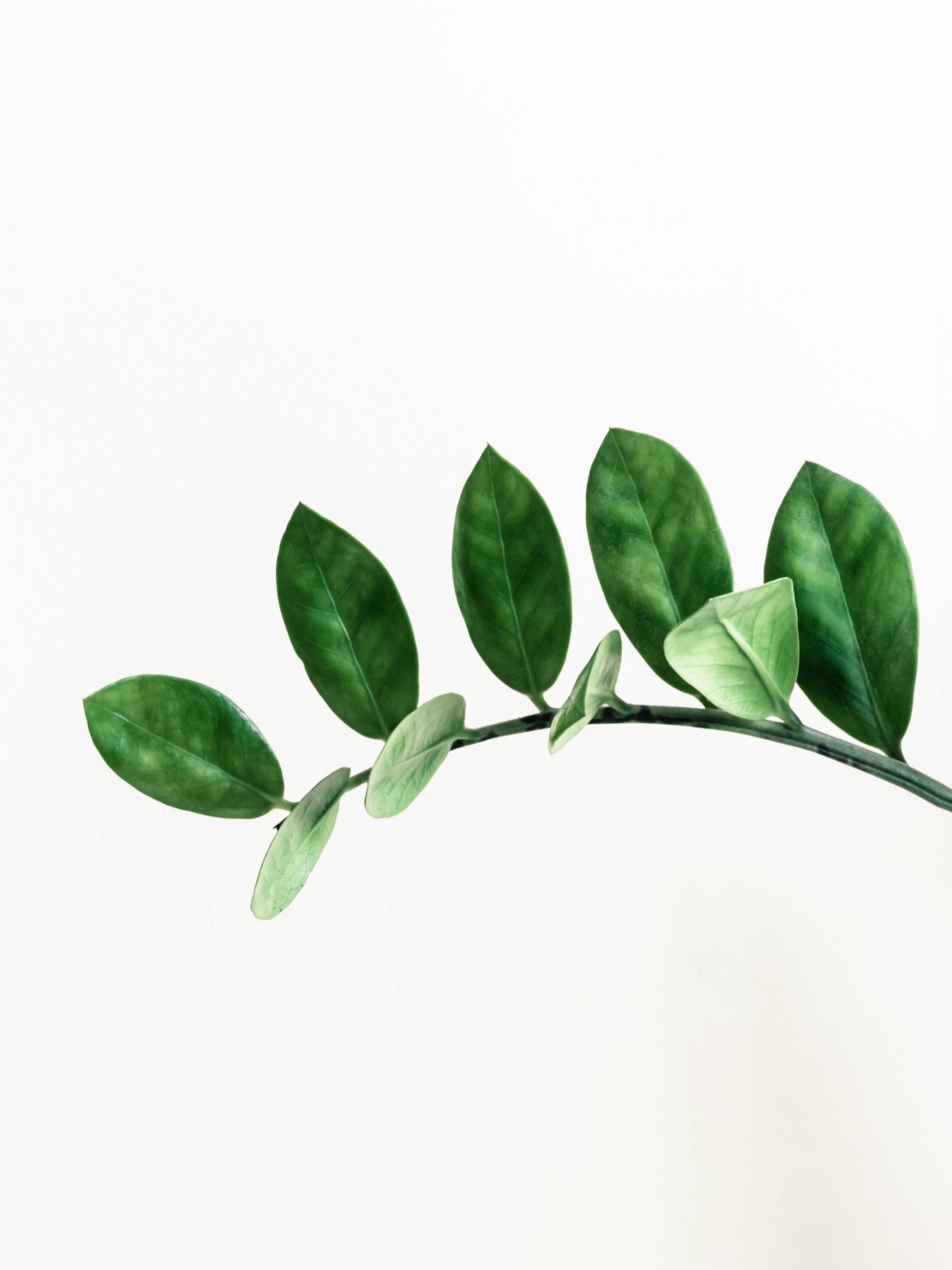 A green leafed plant.