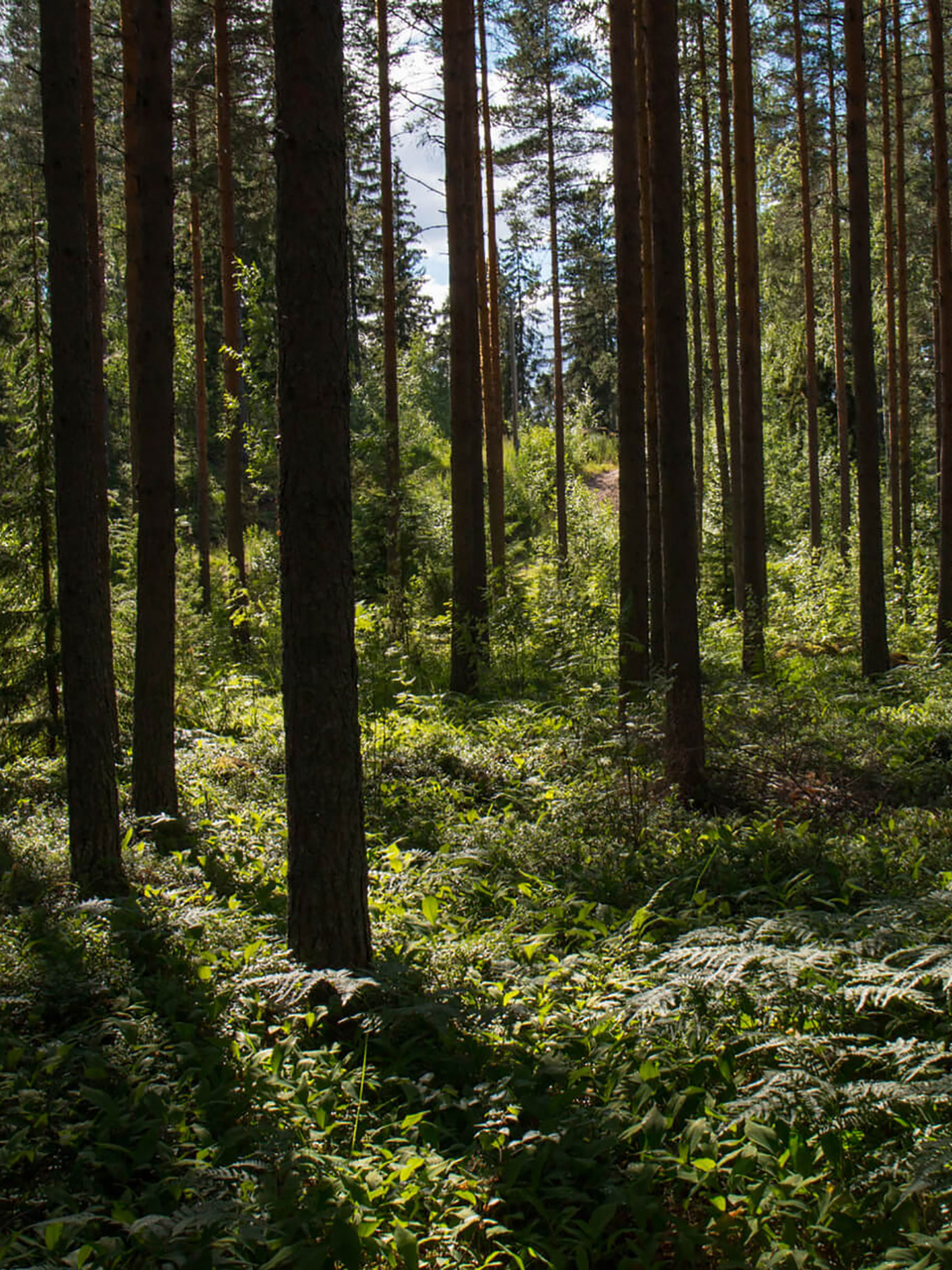 A forest.
