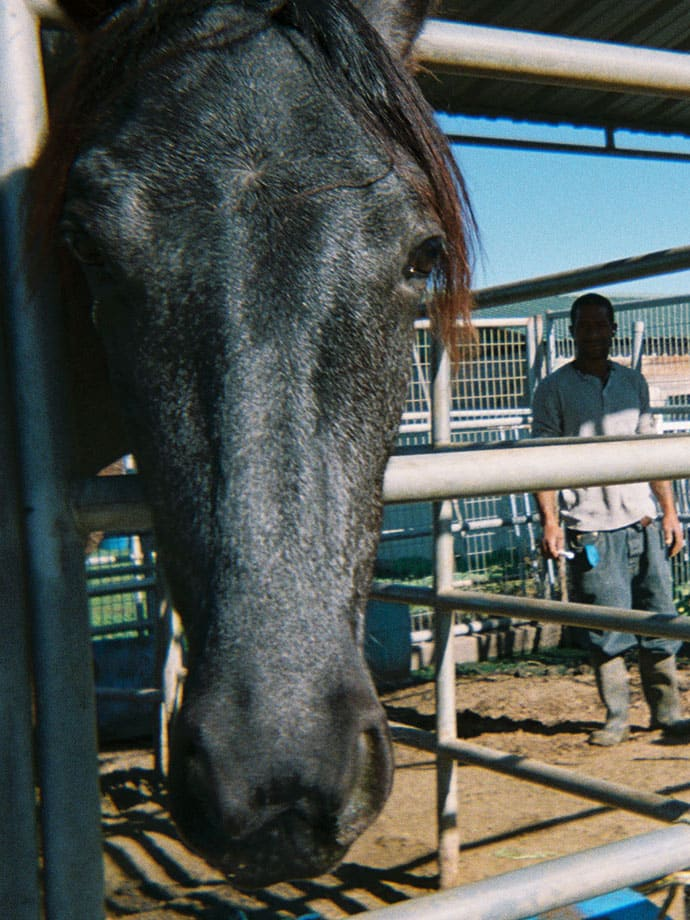 horse staring at camera with man in background
