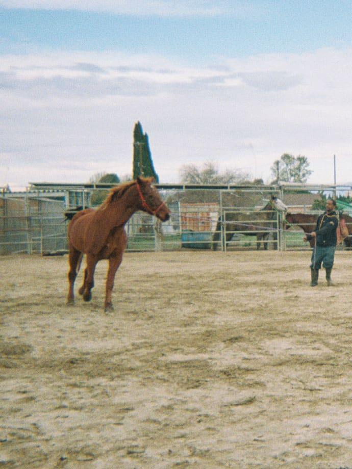 horse galloping around ranch