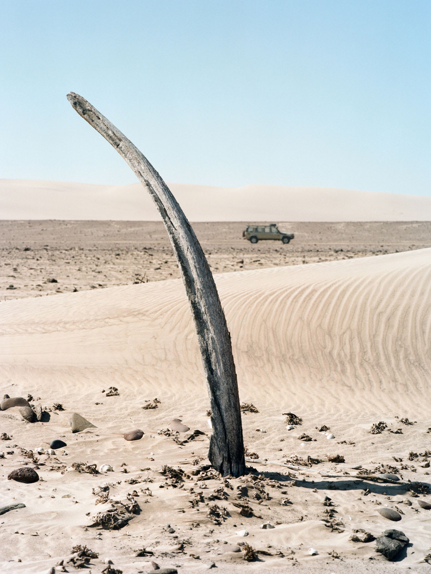 A weathered whale bone sticking out of the ground in a desert with a jeep driving in the distance behind it.