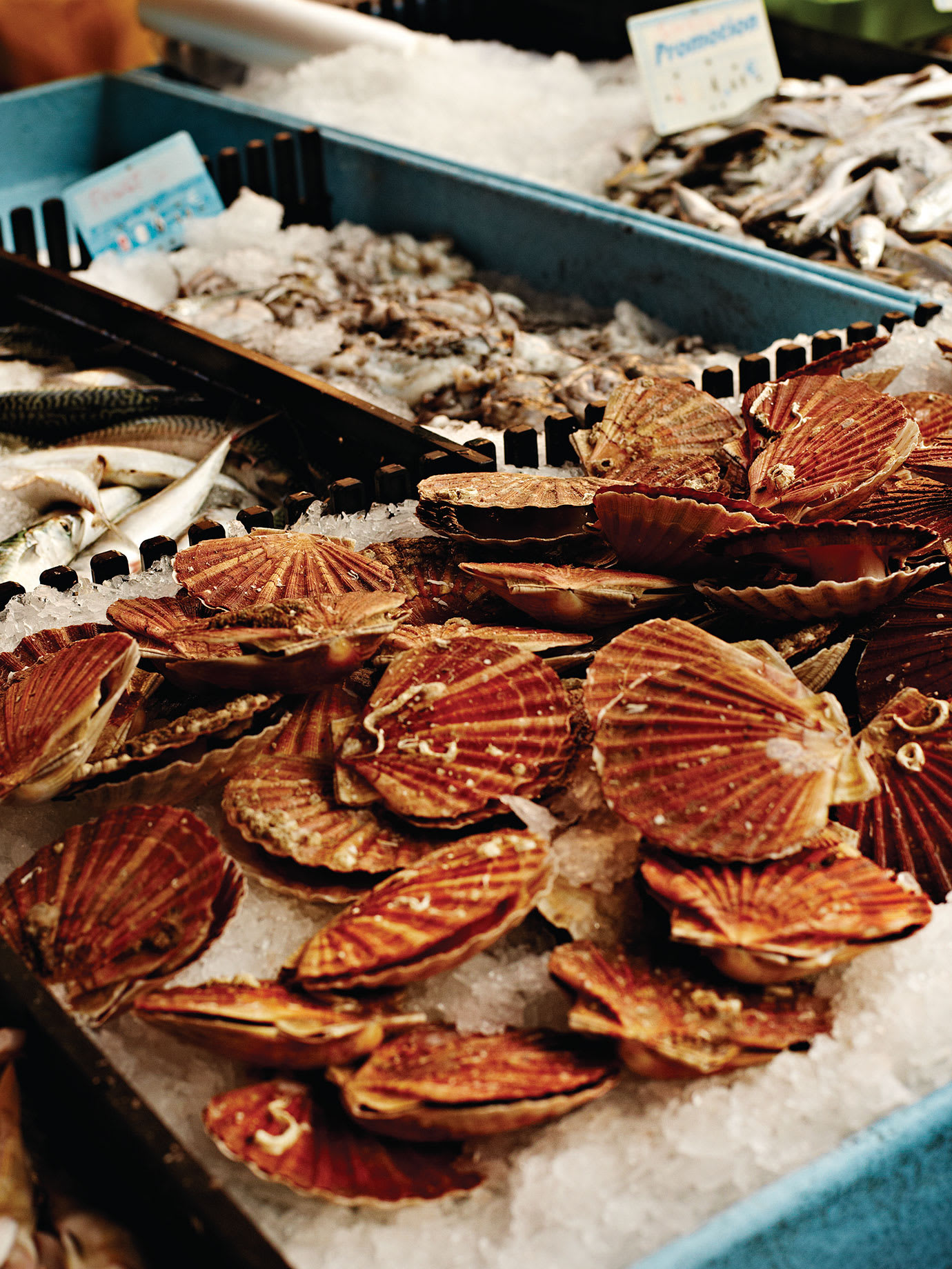 Oyster shells for sale in a market.