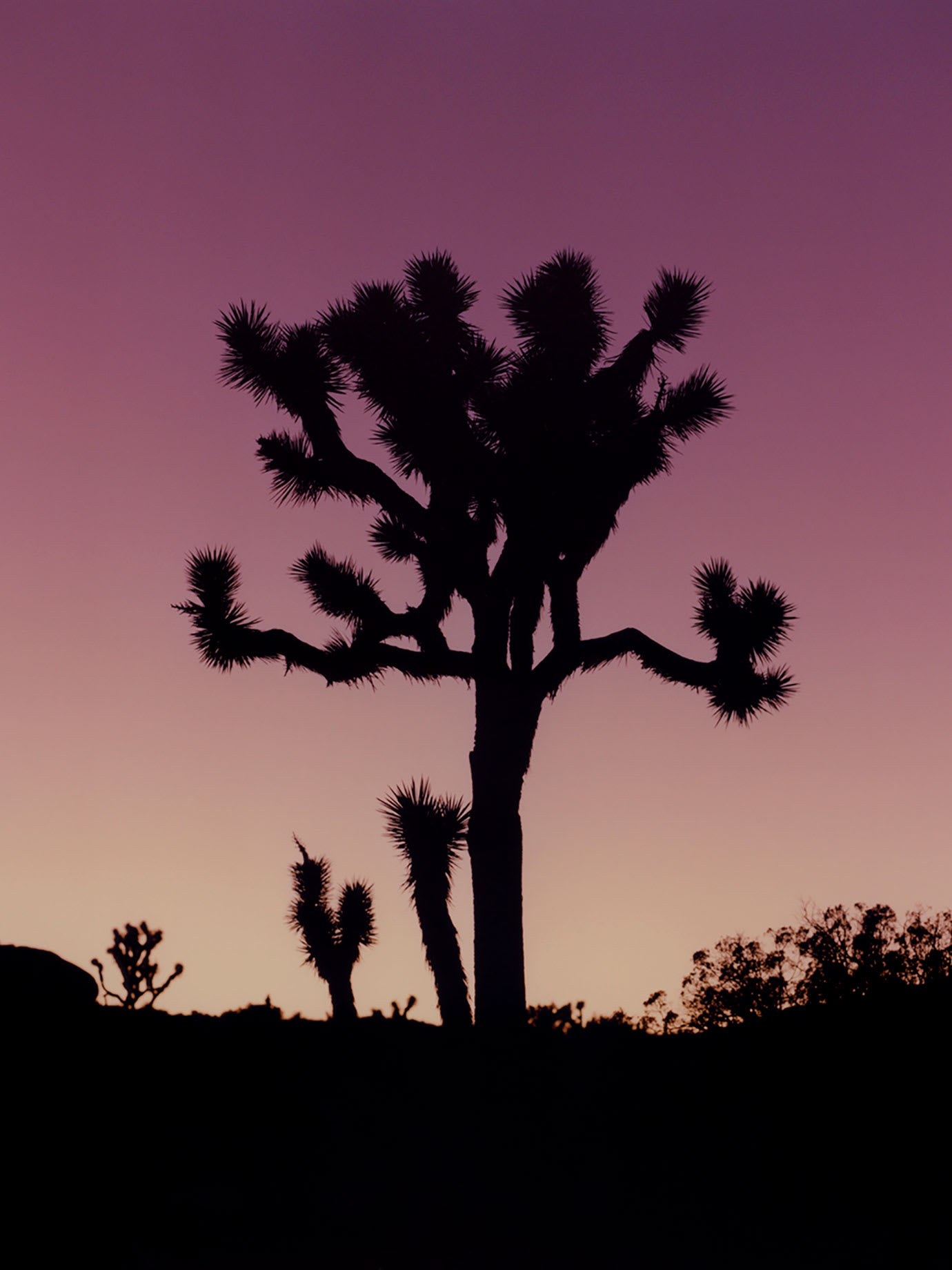 The silhouette of a cactus at sunset.