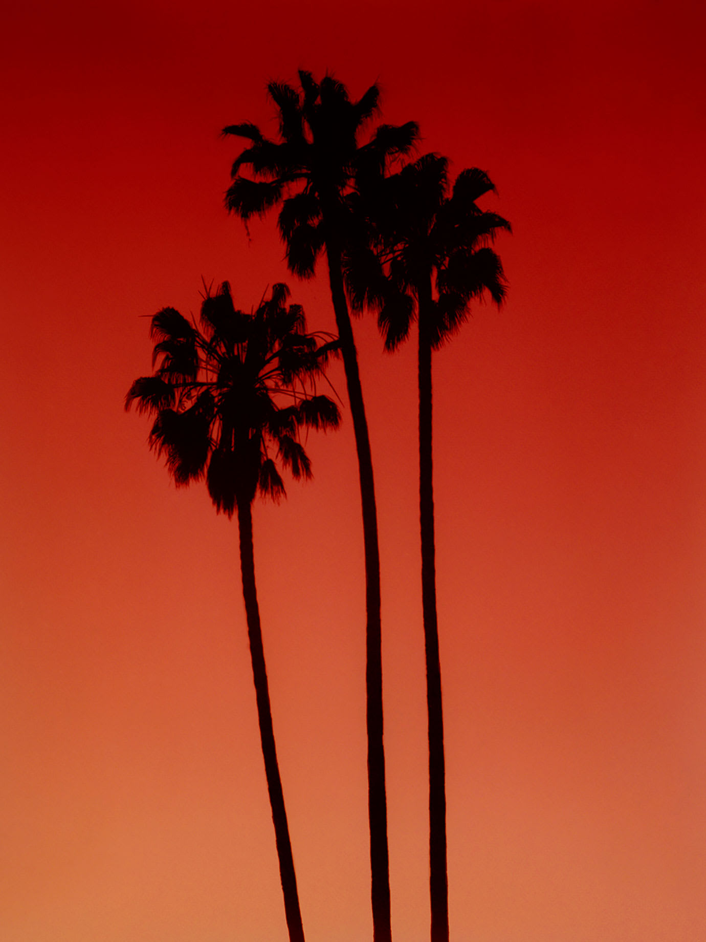 The silhouettes of three palm trees with a red sky behind them.