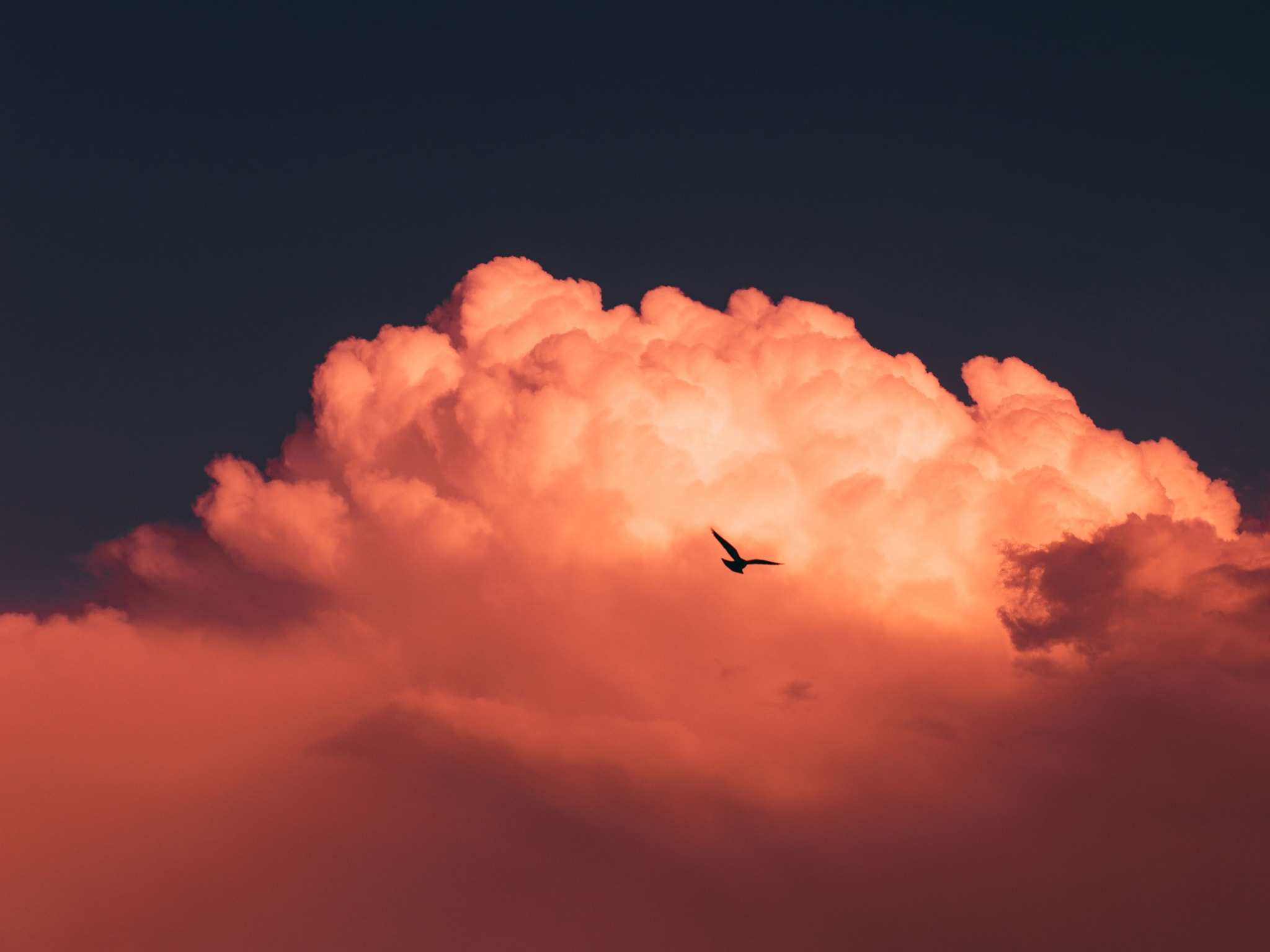 A silhouette of a bird against a cloud in the sky at sunset.