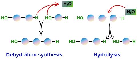 dehidracijska sinteza