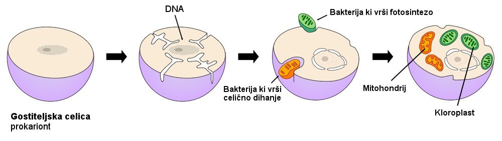 Endosimbiotska hipoteza