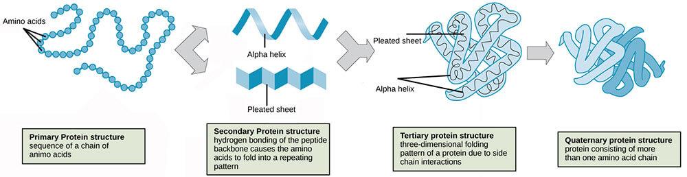 Vse zgradbe beljakovin